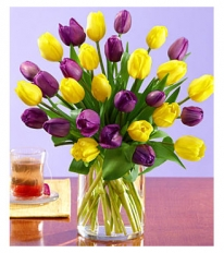 30 Purple and Yellow Tulips