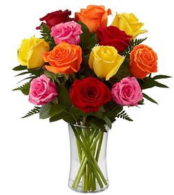 1 Dozen Long Stem Mixed Roses