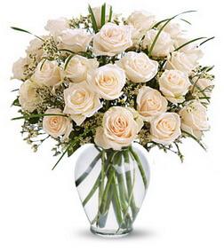 Premium Elegance Roses