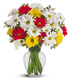 Colorful Daisy Bouquet