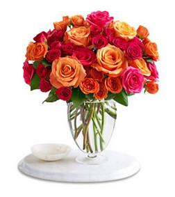 50 Multicolor Roses