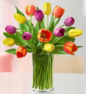 Assorted 15 Tulips