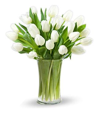 Classic White Tulips