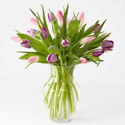 Royal Flora Tulips