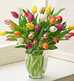 30 Radiant Tulips