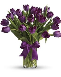 Adoring Purple Tulips
