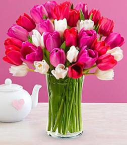 Blushing Pink Tulips