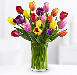 20 Multicolored Tulips