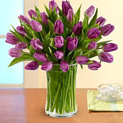 25 Purple Tulips