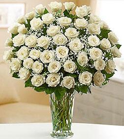 Serene White Roses